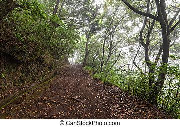 ファンタジー, 森林, マデイラ, 島