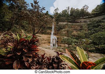 フィリピン, 島, 美しい, 滝, 自然, 切手, bohol