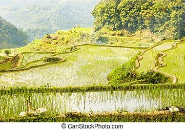 フィリピン, banaue, 日の出