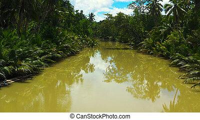 フィリピン。, bohol, jungle., 川