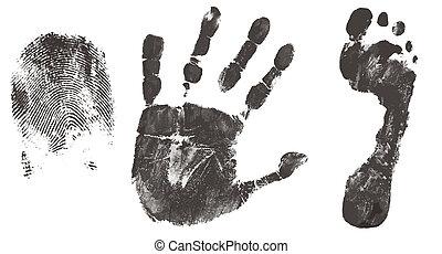 フィート, 印刷, 指, 手
