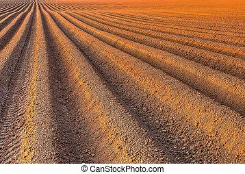 フィールド, すき, 農業, 種まき, 前に