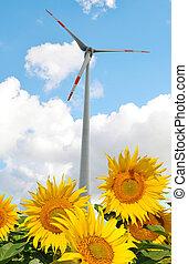 フィールド, ひまわり, 風, turbine.