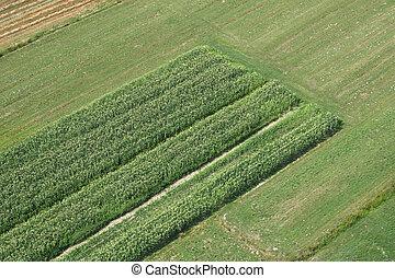 フィールド, イメージ, 航空写真, 牧草地