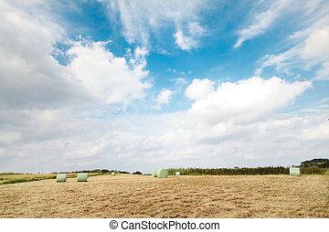 フィールド, ベール, 干し草