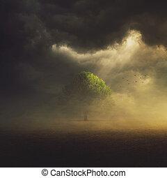 フィールド, 単一, 木