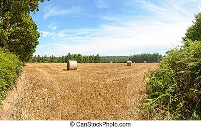 フィールド, 収穫, 小麦, 後で