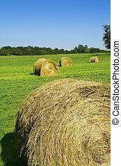 フィールド, 回転する, 干し草