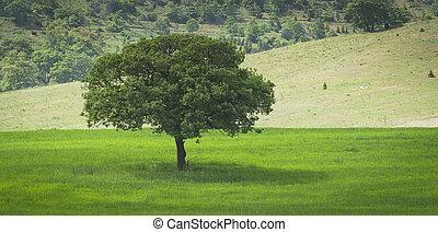 フィールド, 孤独, 木