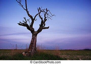 フィールド, 孤独, 木, 乾かされた