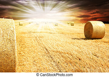 フィールド, 干し草のベール