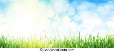 フィールド, 広く, 空, 抽象的, 草, 夏, 背景