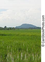 フィールド, 米, 緑, タイ