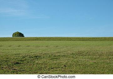 フィールド, 緑の空