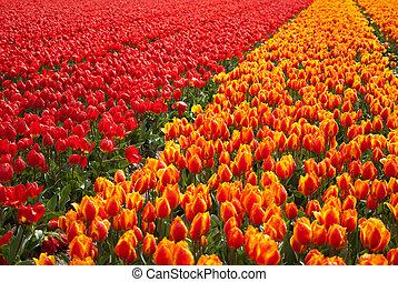 フィールド, 花, 背景