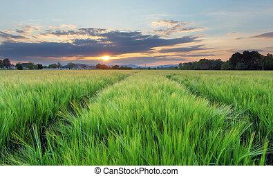 フィールド, -, 農業