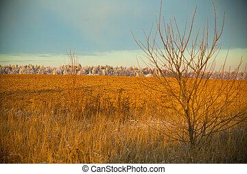フィールド, 風景, 日没, 秋