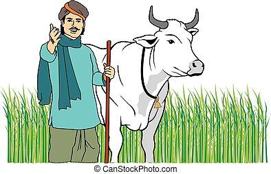 フィールド, indian, 牛, 農夫