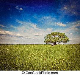 フィールド, lanscape, 春, 夏, 単一, 緑の木, 景色
