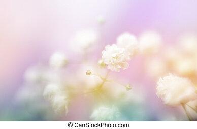 フォーカス, 柔らかい, 花, バックグラウンド。, ぼやけ, 白