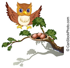 フクロウ, 卵, 木の枝, 監視