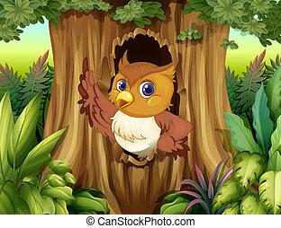 フクロウ, 木, くぼみ