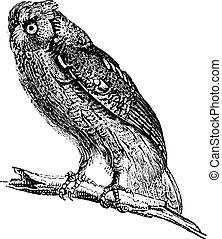 フクロウ, engraving., 型
