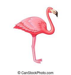フラミンゴ, イラスト, 脊椎動物, 温血, ∥あるいは∥, ピンク, aves, ベクトル