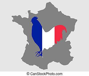 フランス語, 雄ん鶏