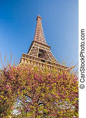 フランス, 春, 木, エッフェル, パリ, タワー