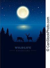 フルである, オオシカ, 月, 夜, 湖, 野生生物, 荒野, 星が多い