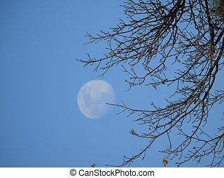 フルである, 日, 月