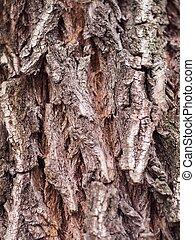 フルである, 自然, フレーム, 木, 手ざわり, 樹皮