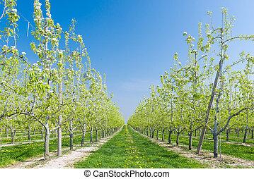 フルーツ果樹園