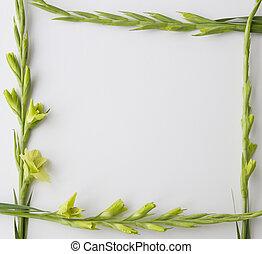 フレーム, の, 花, グラジオラス, 白, バックグラウンド。, 平ら, 位置, 平面図