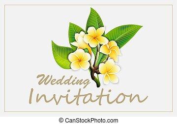 フレーム, 招待, 隔離された, 優雅である, plumeria, 背景, 結婚式, 花