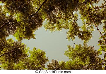 フレーム, 木