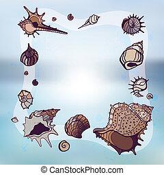 フレーム, seashells.