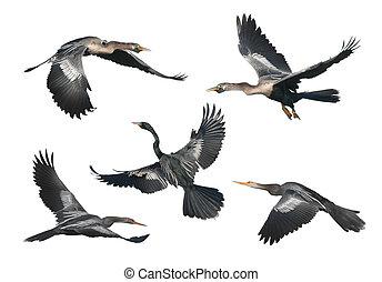 フロリダ, 鳥