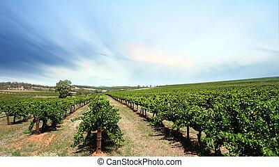 ブドウ園, 晴れわたった空