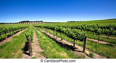 ブドウ園, 緑, 鮮やか