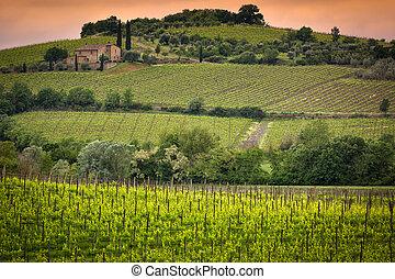 ブドウ園, 近くに, montalcino, トスカーナ, イタリア