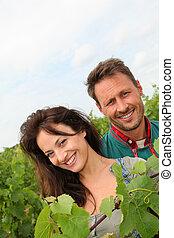 ブドウ園, winegrowers, 恋人, 幸せ