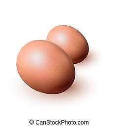ブラウン, 卵, クローズアップ, 白, バックグラウンド。