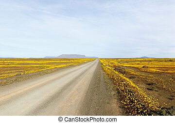 ブラウン, tankwa, ただ, karoo, 先導, うわーっ, 黄色の坑道