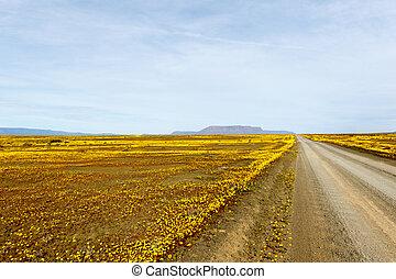 ブラウン, tankwa, 平ら, フィールド, 黄色の坑道, 風景, karoo