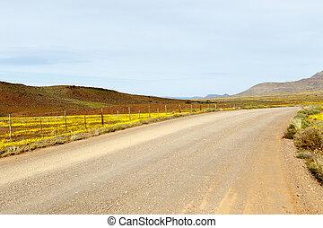 ブラウン, tankwa, karoo, 先導, 黄色の坑道