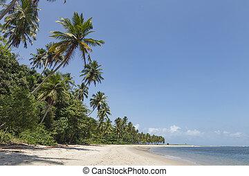 ブラジル, porto, galinhas, de, -, 木, やし, pernambuco, recife