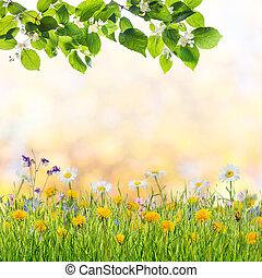 ブランチ, 春, 木, 背景, 花が咲く, 美しい