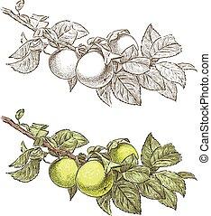 ブランチ, 木, アップル